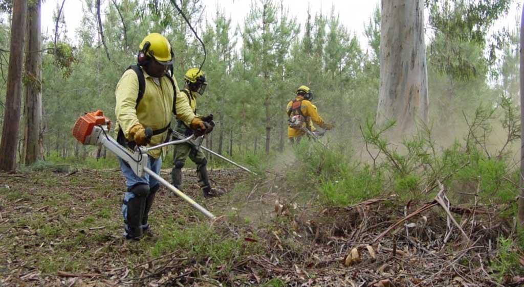 Governo adia prazo limite para limpeza de terrenos florestais