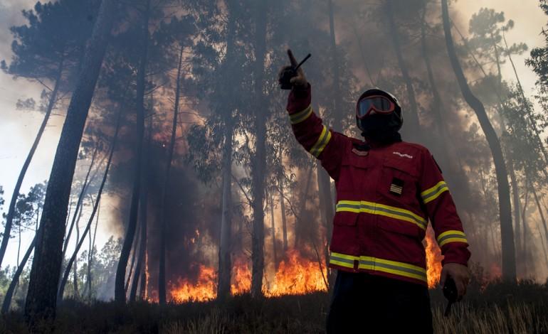 Homem detido por suspeitas de atear fogo em Oliveira de Azeméis