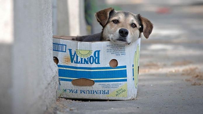 Cães vivem abandonados numa casa na Maia há mais de um ano