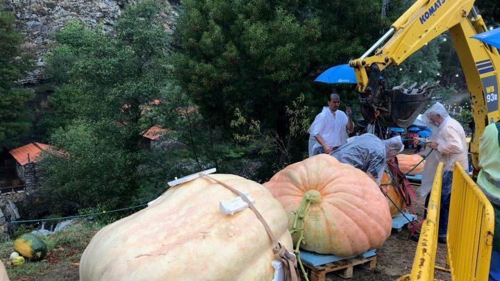 Paredes lança III concurso de hortícolas gigantes a realizar em setembro