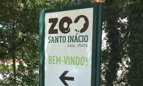 Criança ficou parcialmente sem dedo após ser mordida por macaco no Zoo Santo Inácio em Gaia