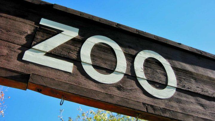 Zoo Santo Inácio reabre portas esta terça-feira com horário alargado