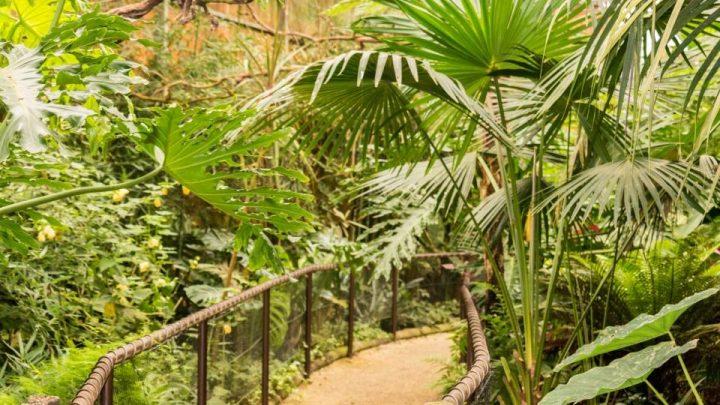"""""""Mundo Tropical"""" inaugurado no Zoo de Gaia"""