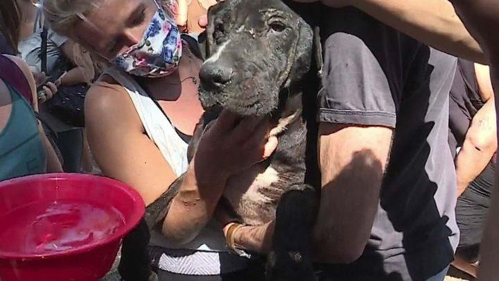 Processo crime envolvendo a morte de animais em Santo Tirso há um ano atrás está parado